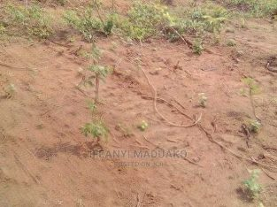 600 sqm plot of land at Ayebo registered survey and Deed of Assignment